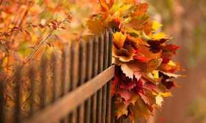 Опыты с листьями деревьев