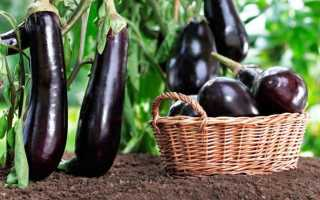 Баклажаны посев на рассаду