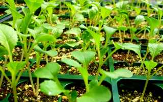 Растения выращенные из черенков