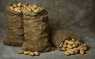 Гниет картофель в погребе что делать