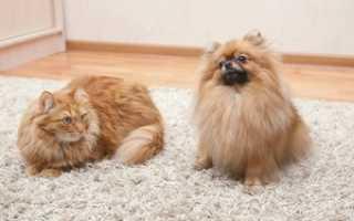Как убрать кошачью шерсть