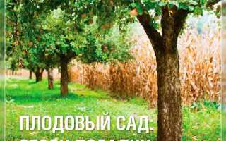 Уход за саженцами плодовых деревьев