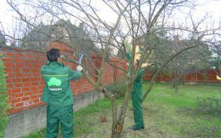 Когда лучше делать обрезку плодовых деревьев