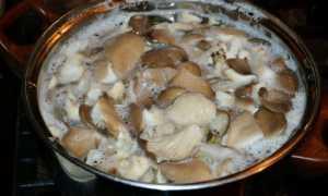 Пересолила грибы при засолке что делать