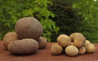 Какие грибы растут под землей