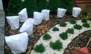 Чем укрывать кусты на зиму