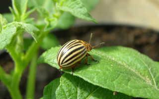 Препараты против колорадского жука
