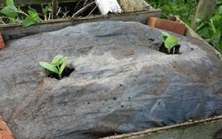 Как растет кабачок