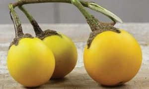 Желтые баклажаны: описание