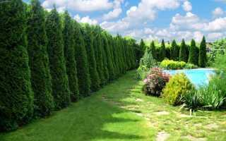 Деревья и кустарники бывают