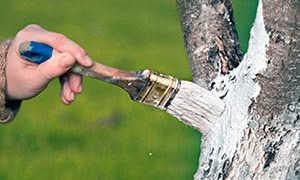 Белила для деревьев