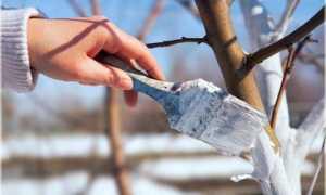 Акриловая побелка для деревьев