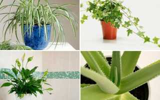 Растения которые лечат