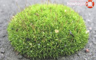 Как убрать мох с газона