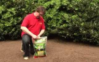 Как выбрать газонную траву для дачи