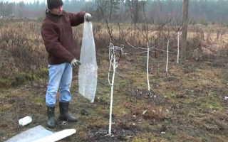 Как подготовить яблоню к зиме на урале