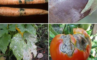 Болезни овощей