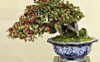 Популярное домашнее дерево