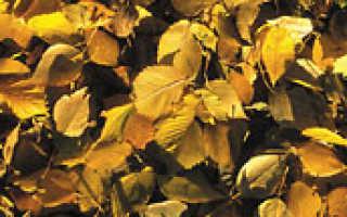 Нужно ли убирать листву осенью