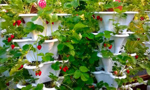 Выращивание клубники в вертикальных грядках