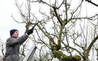 Подготовка молодых плодовых деревьев к зиме