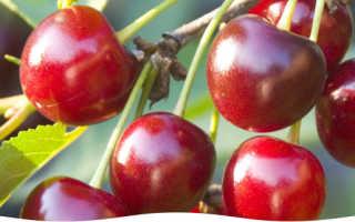 Заболевания вишни