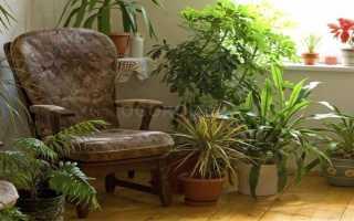 Домашние растения не требующие света