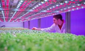 Лампы для роста растений светодиод