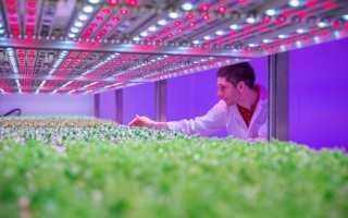 Светодиодные лампы для растений как выбрать