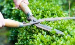 Новости садоводства и огородничества