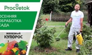 Как развести железный купорос для обработки деревьев