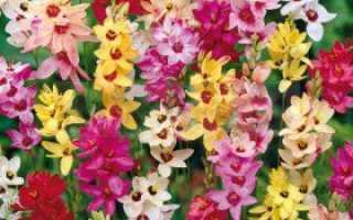 Какие цветы нужно выкапывать на зиму