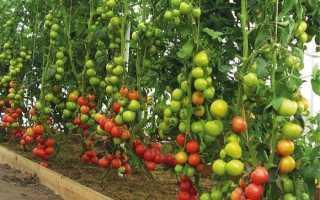 Как увеличить урожай