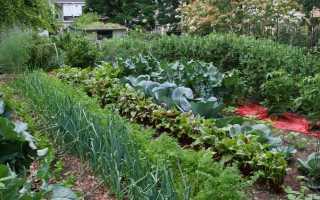 Выращивание рассады как бизнес