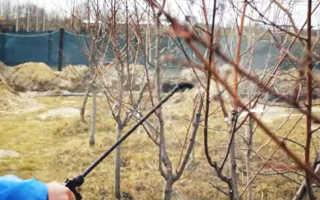 Когда обрабатывать деревья от вредителей