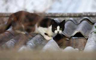 Как отпугнуть котов