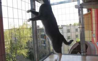 Загон для котят