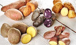 Признаки столового картофеля