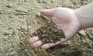 Как понизить кислотность почвы в огороде