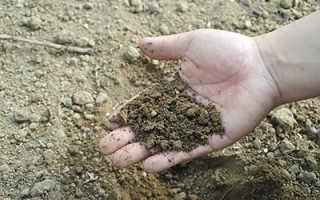 Как снизить кислотность почвы на огороде