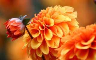 Какие растения цветут осенью