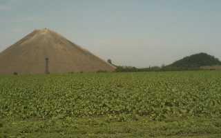 Угольная зола для огорода