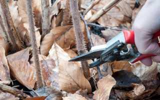 Осенняя обрезка малины по высоте