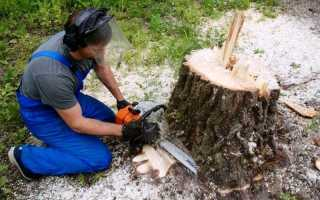 Выкорчевка деревьев