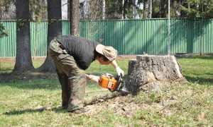 Как избавиться от пеньков на даче