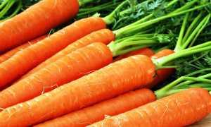 Почва под морковь