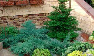 Фунгициды для хвойных растений