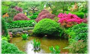 Виды декоративных растений