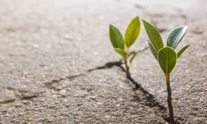 Что влияет на плодородие почвы