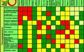 Лучшие предшественники овощных культур таблица